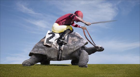 TurtleJockeySlow_TS_580