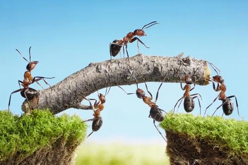 7-verschillen-tussen-een-groep-en-een-team1